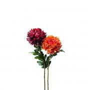 Dekoratyvinė gėlė chrizantema Leonardo CASTAGNA, 72 cm
